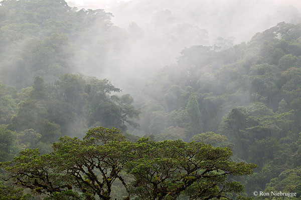 The Cloud Forests